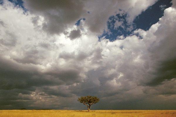 Mara acacia